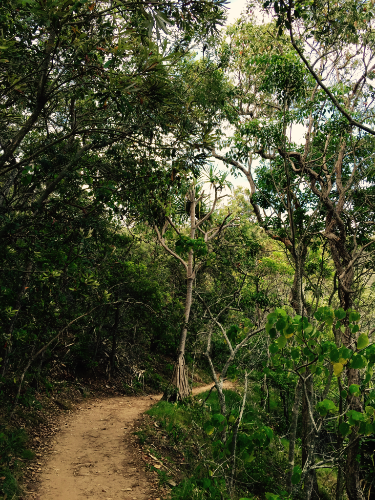 Coastal rainforest vegetation