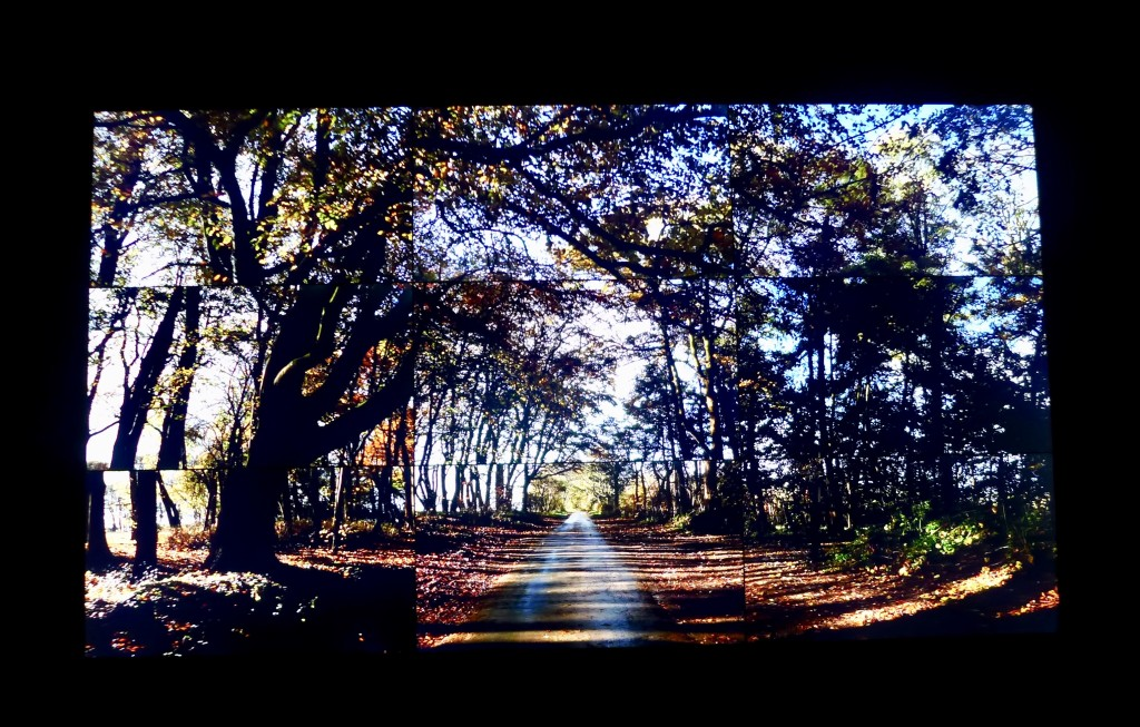 Video work of Woldgate Woods Autumn 2010 comprising 9 high definition screens  Photograph:  GRACIE